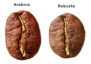 arabica, robusta coffee bean